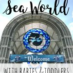 16 Tips for Going to Sea World with a Baby or Toddler